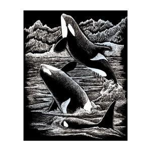 Silver Foil/Orca Whales