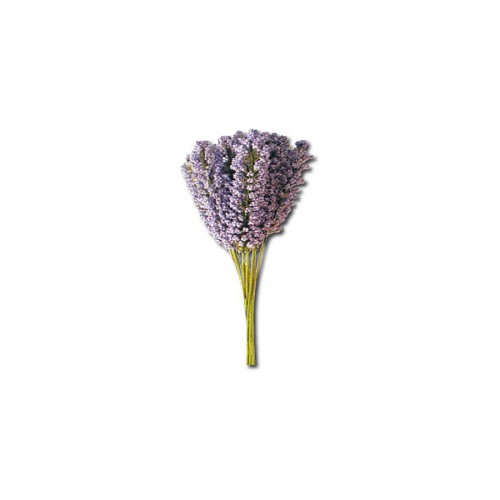 12 Lavender Stalks With Leaves Bouquet