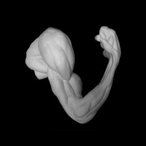 Kipskuju Anatoomiline küünarnukist kõverdatud biitseps