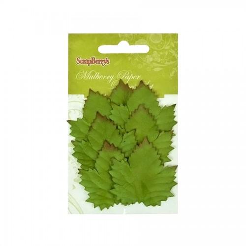 Set Of Leaflets, 7 Pcs, Cedar