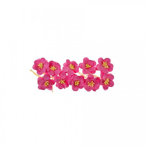 Cherry Blossom, 10 Pcs Rose
