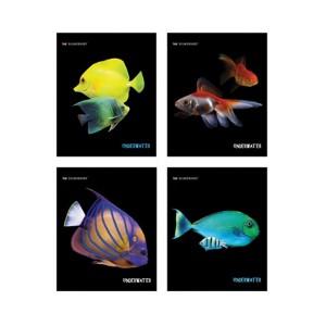 """Students Copybook,48Lh,А5 """"Aquarium Fish"""","""