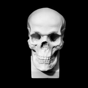 Plaster Cast Human Skull Anatomical Referece